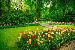 sw20 expert gardening wimbledon